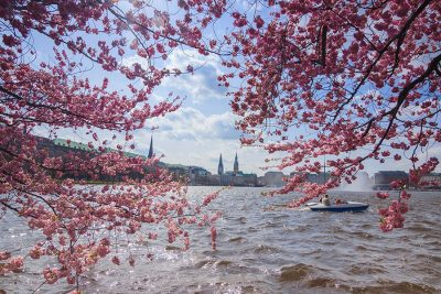 Alster Hamburg Kirschblüten