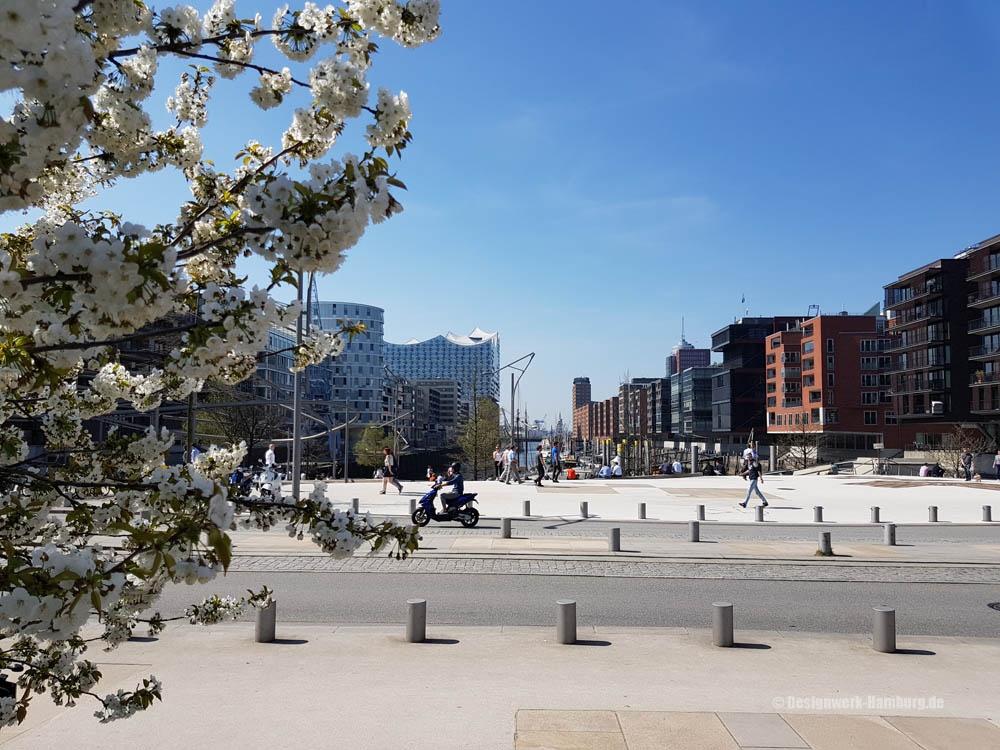 Kirschblütenzeit in der Hafencity